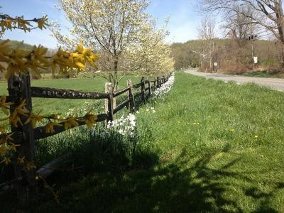 Aged Split Rail in Spring